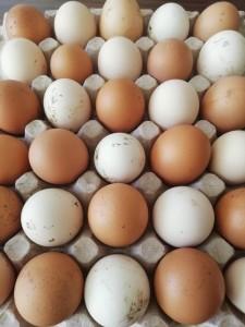organik-koy-yumurta-erdem-organik